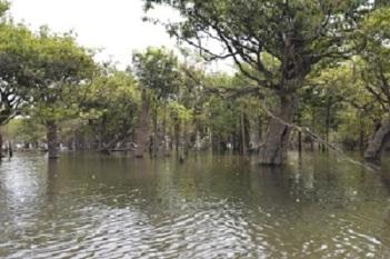 La mangrove 2 ter