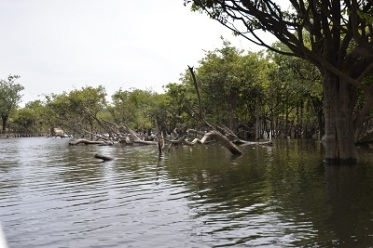 la mangrove 3 bis