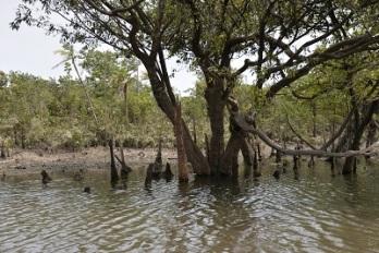 la mangrove 4 bis