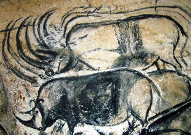 n°12 mouvement rhinocéros